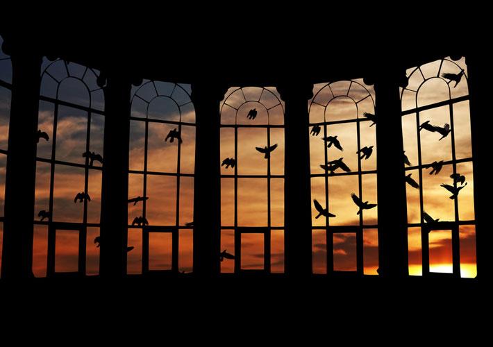 Bird-safety-window-film