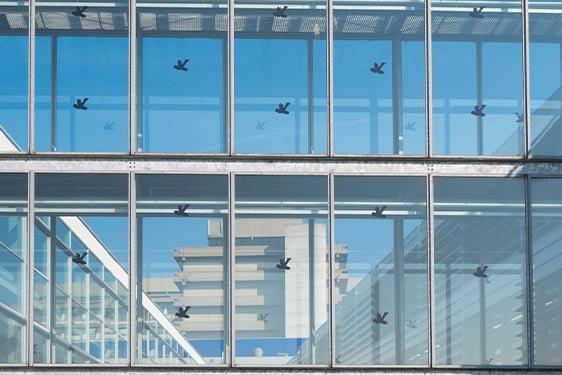 north-carolina-birds-hitting-windows