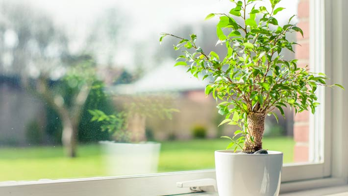 How does window film affect plants?